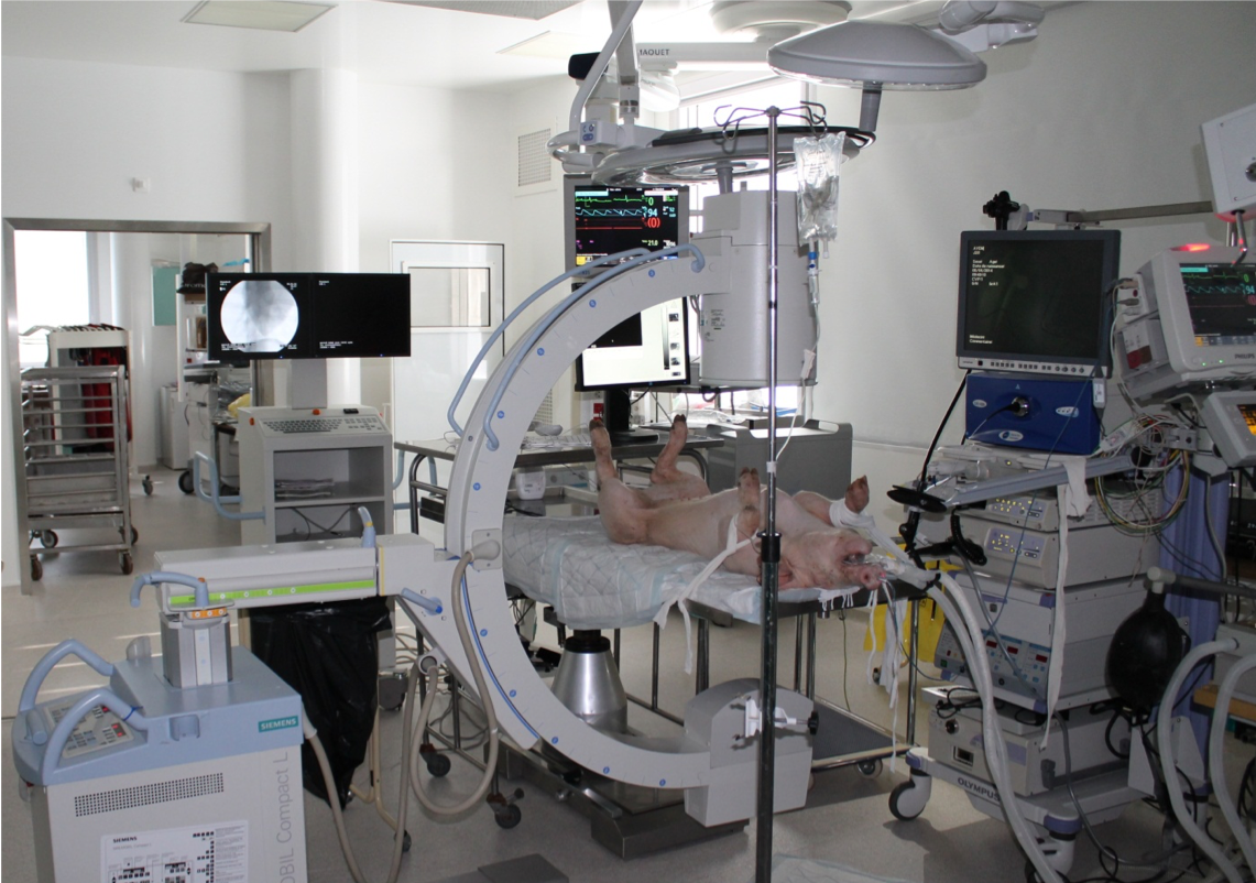 GI Endoscopy Advanced course | EMR & ESD on Pigs | Prof